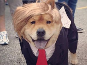 dog-donaldtrump-playbuzz_1024x1024